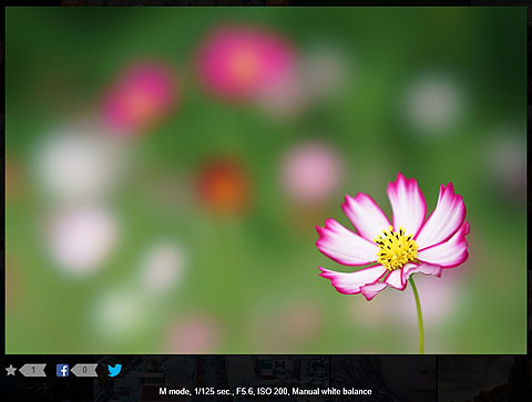 SonyGlobalPhoto-01.jpg